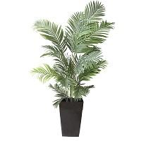 "Palmier Areca 6,5"""