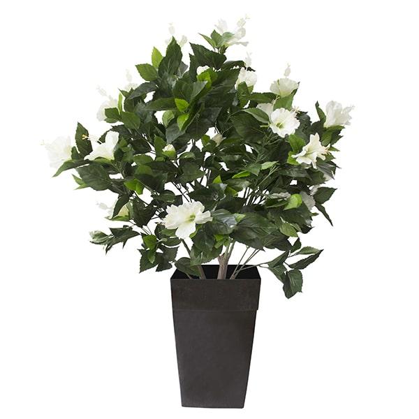Plant-hibiscus-blanc-decoration-exterieur-fausse_plante