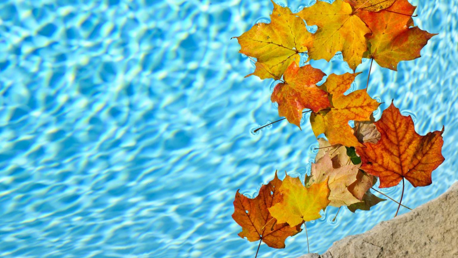 fermeture-piscine-feuilles-automne